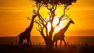 Почивка в Кения - 7 нощувки All Inclusive с полет от София